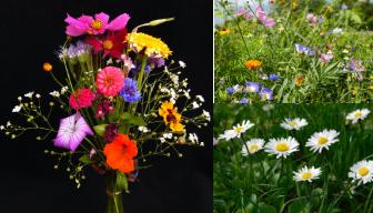 wildflowers.png